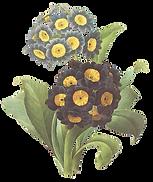 Negro y amarillo de las flores Ilustraci