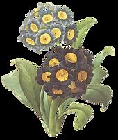 黒と黄色の花のイラスト