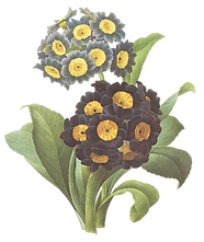 Black and Yellow Flowers Illustration