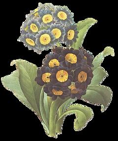 Черные и желтые Цветы иллюстрация