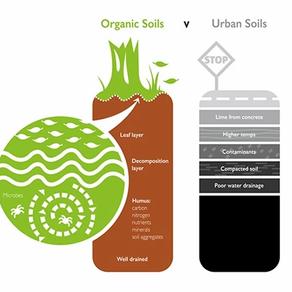 Dirt Is Not Soil