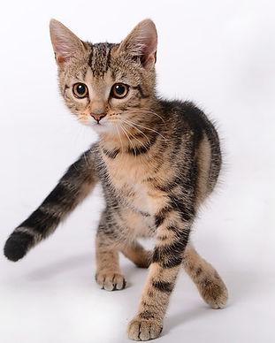 kitten-694918_640.jpg