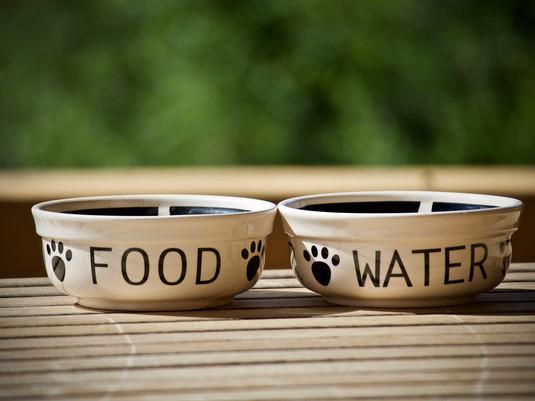 La nutrition de nos animaux : Partie 2