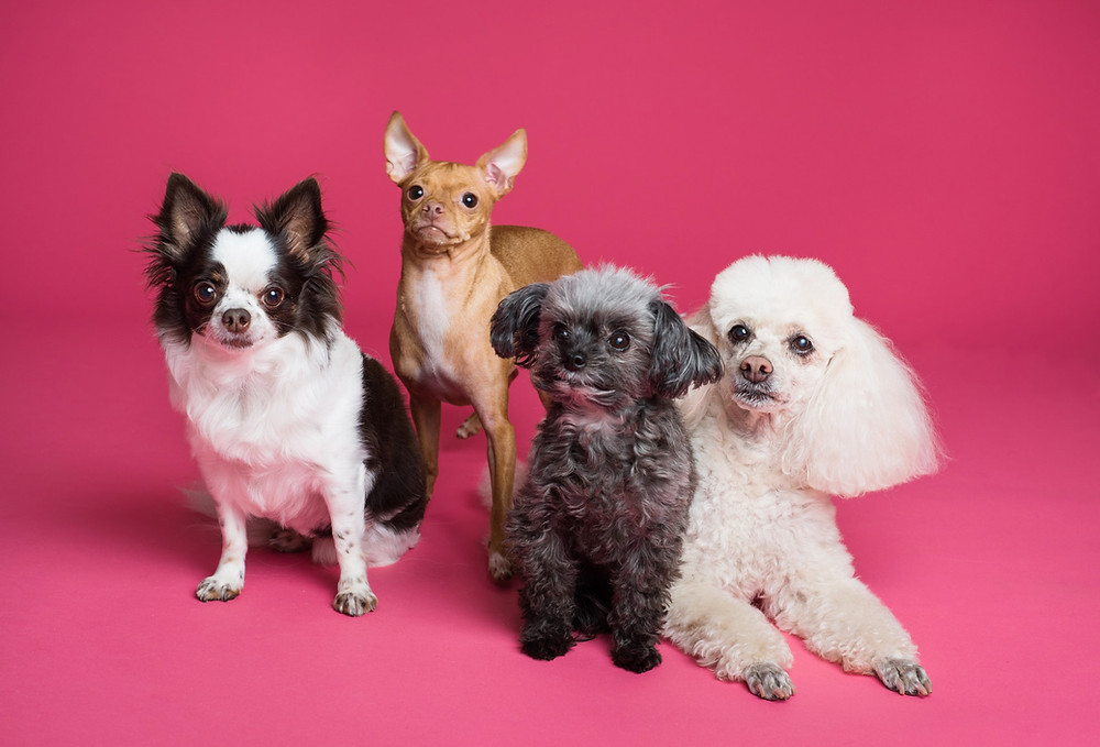Quel est la race de votre animal ?