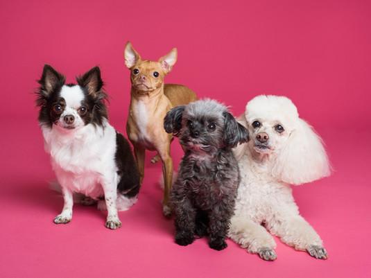 Quel est la race de votre chien ? Vous pourriez avoir une réduction de -20% sur les massages canins