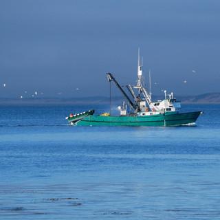 Fishing Boat - Monterey, California