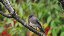 A Walk Through My Garden - Talking About Birds