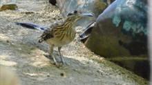 Desert Birding