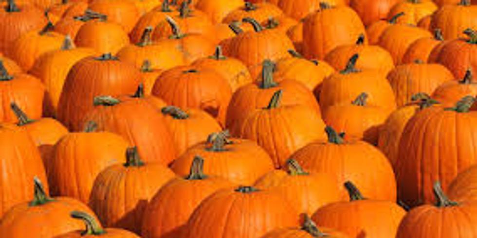 Plymouth Pumpkin Patch