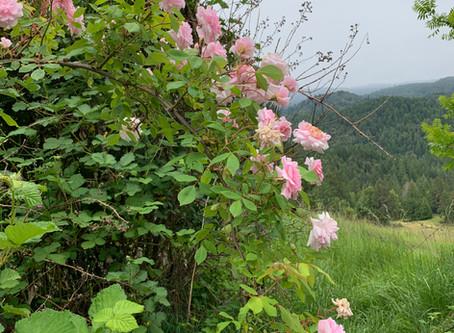 Photos 山の春