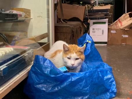 お宝と出会い 猫のトミー