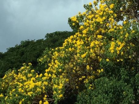大木に咲く花
