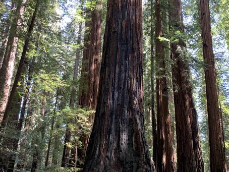 天空に一番近い木