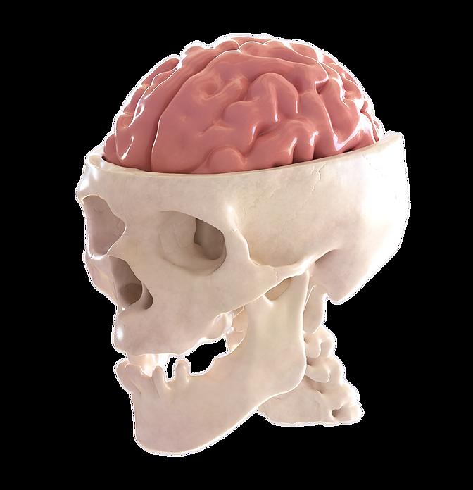 skull final render.png