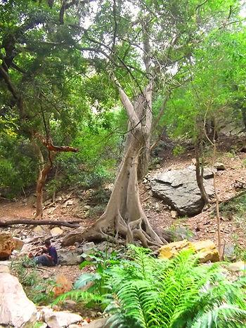 The Journey Tree Spiritual Guidance