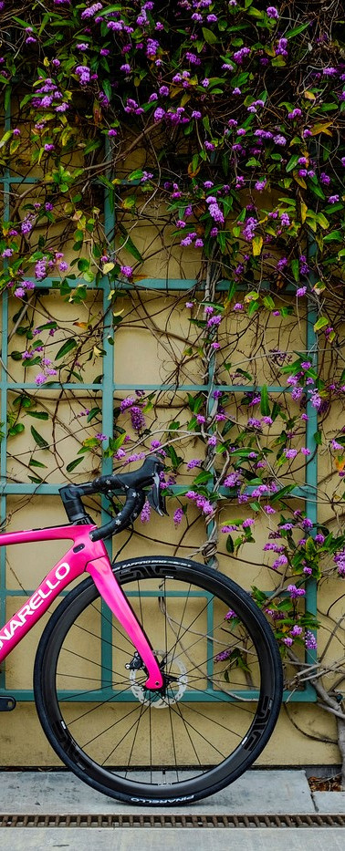 Zealot Cycleworks - Pinarello Prince