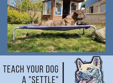 Teach your dog to 'Settle'