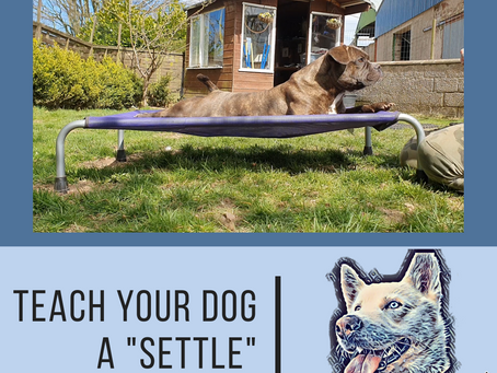 Teach your dog to 'Settle'