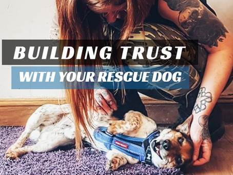 Building Trust With Your New Rescue Dog.