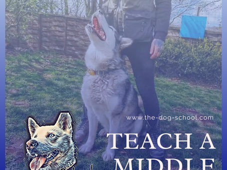 Teach Your Dog A 'Middle'