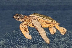 2 x 3 Sea Turtle Oblique.jpg