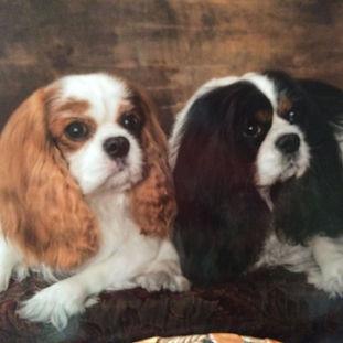 McMath Puppies.jpg
