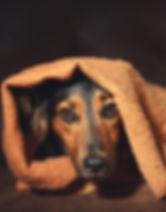 COTD Fall 2018 Melissa Hatfield Canine M
