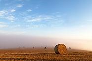 Harvest_Mist_Stapleford.jpg