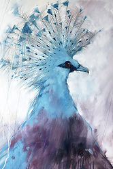 SAH_Victorian Pigeon.jpg