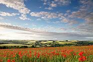 Poppies_Hanging_Langford.jpg