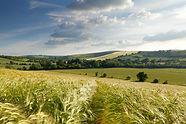 Barley_Fields_Brixton_Deverill.jpg