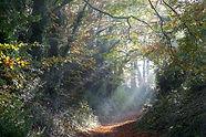 Autumn_Footpath_Corton.jpg
