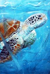 SAH_Turtle.jpg