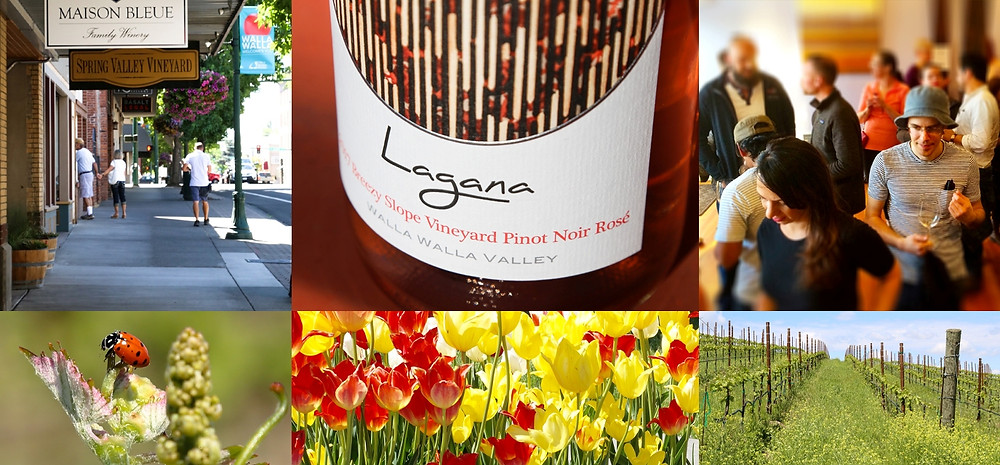photo collage of downtown walla walla, vineyard, people in tasting room, flowers