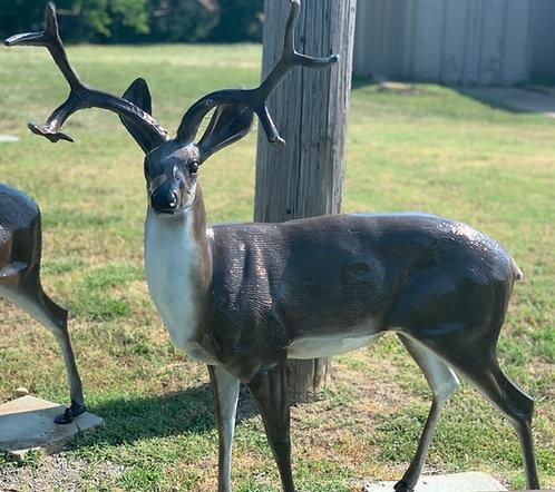 Buck Turned Left