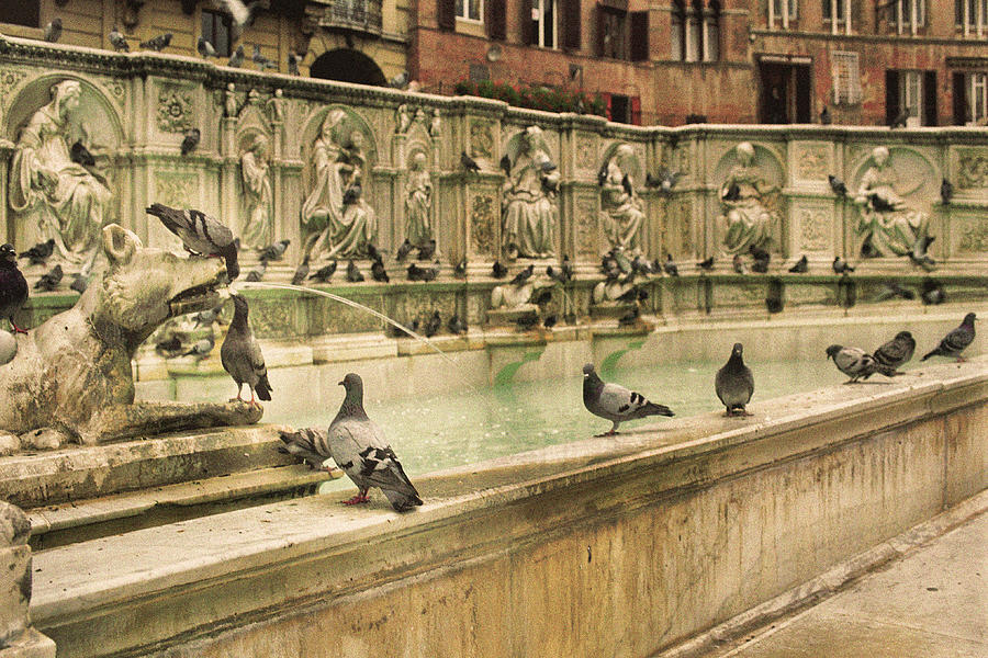 pigeons-at-the-fountain-of-joy-in-siena-italy-greg-matchick