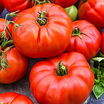 beefsteak tomato.jpg
