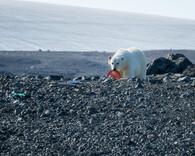 'Plight of the Polar Bear' by Tony Mulvenna