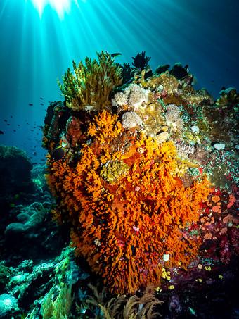 Stunning Coral