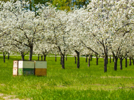 Migratory Beekeeping