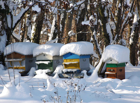 Winterizing Bee Hives: Preparing Your Beehives for Winter