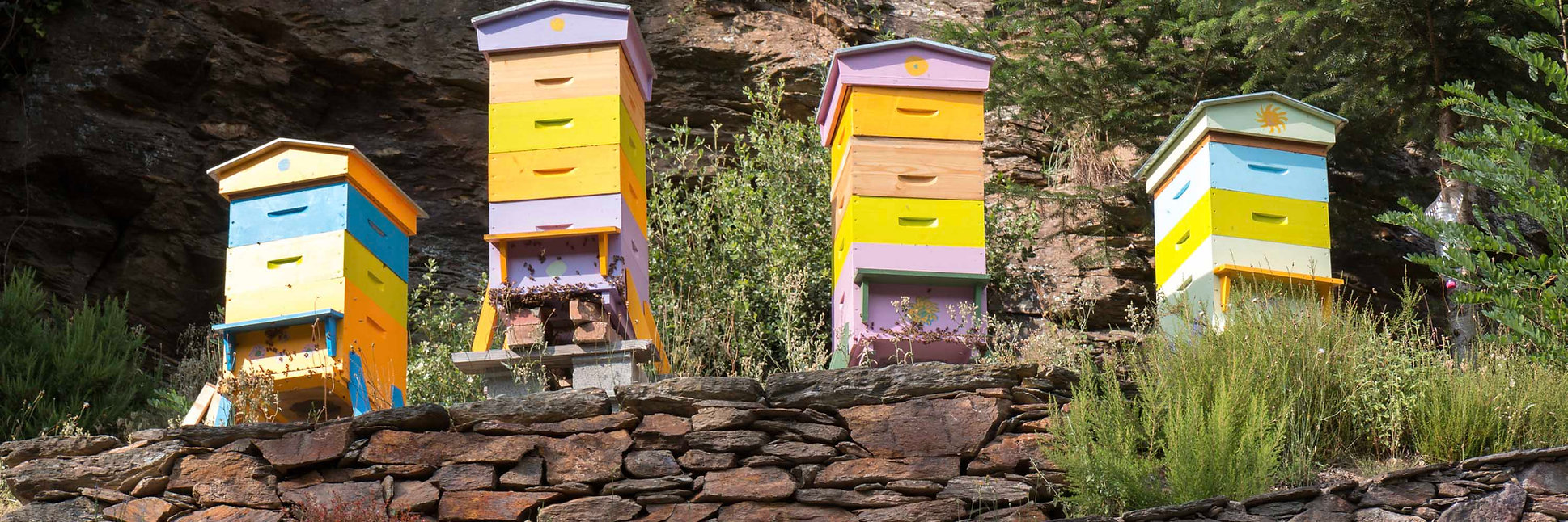 Host a beehive