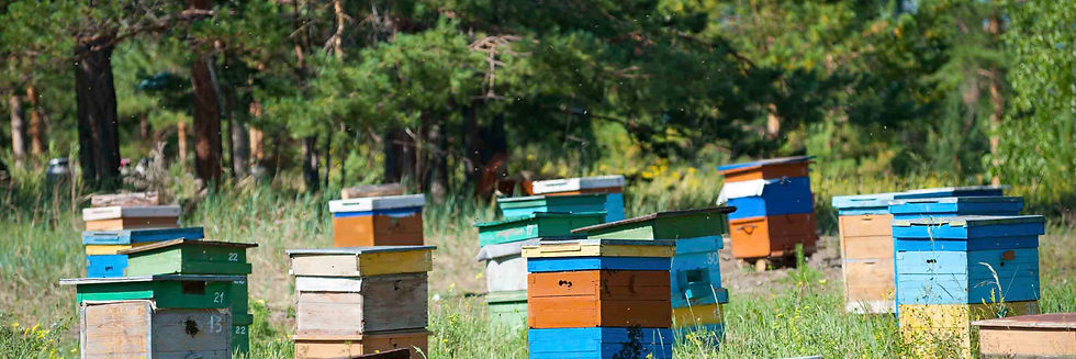 Local MN and WI bees for sale