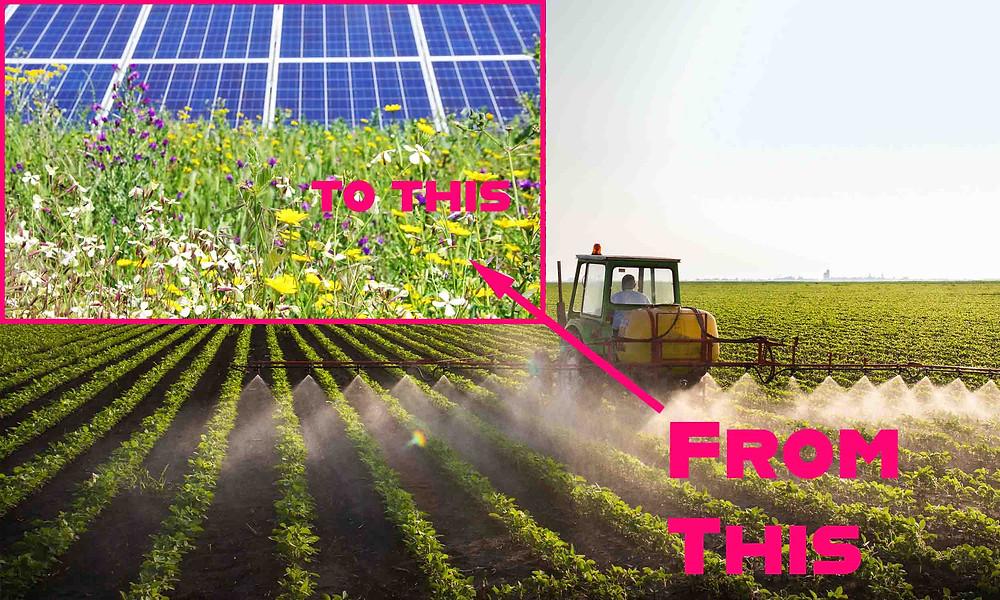 Mono culture to solar field