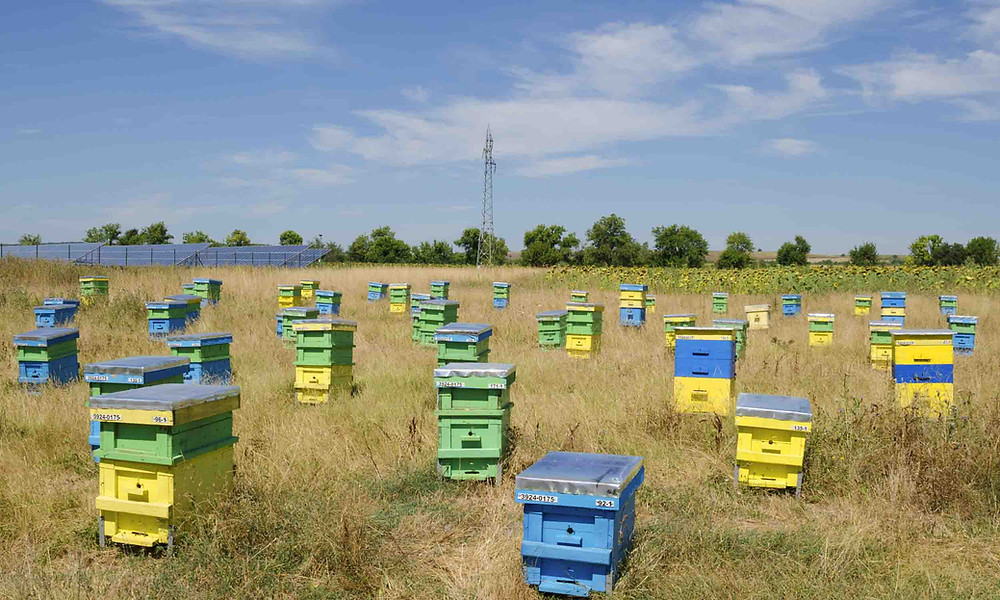 Beehives and solar fields