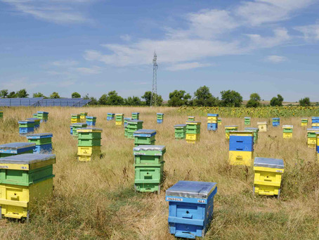 How Solar Energy is Helping the Bees