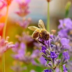 honey-bee01.jpg