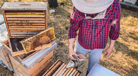 Professionally Managed Beehives