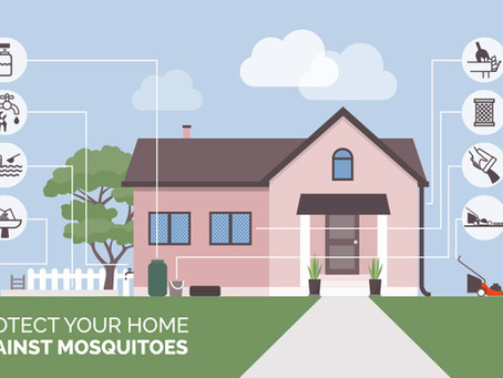 Protect the Bees- Control the Mosquitos