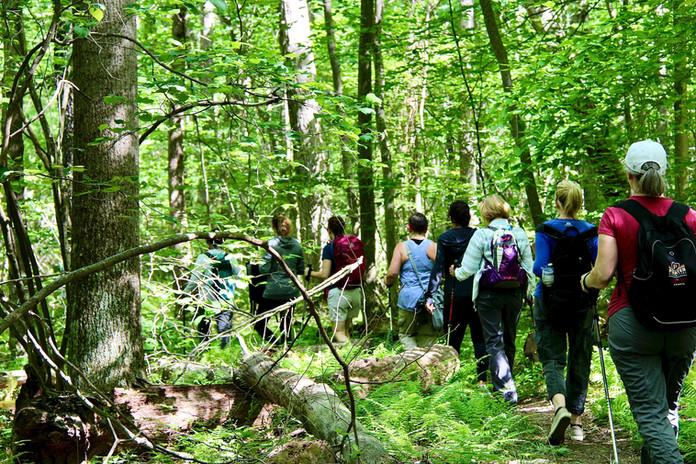 Summer Hike in Bear Run